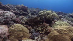 Ocean scenery drunk swimover caused by surge, very healthy and diverse coral Stock Footage