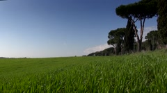 Green  Field on a Spring Day Stock Footage