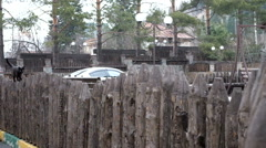 Black cat on a fence - stock footage