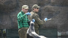 Adult Trainer of a Sea Lions Works Into a Zoo With His Pets Stock Footage