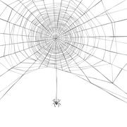 Halloween background. Spider web. Vector illustration Stock Illustration