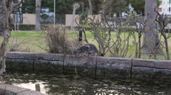 Grey little cat jumps over a water hazard. Pet near a pond in the park Stock Footage