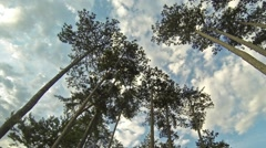 Time-lapse recording under high trees of fast moving clouds on blue sky - stock footage