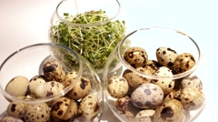 Quail eggs Dolly Shot illuminated on white background with greens close-up. Stock Footage