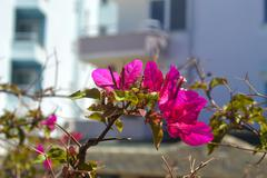 bright flower blossomed in may under the warm sun - stock photo