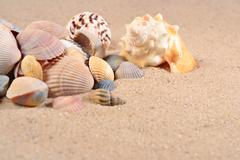 Seashells close-up in a sand - stock photo
