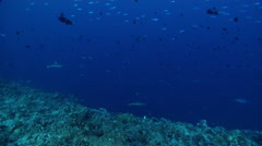 Ocean scenery lots of diverse fish life, on exposed seaward wall and plateau, Stock Footage