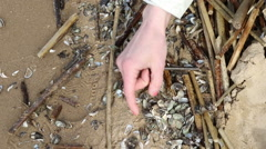 Female hands collect cockleshells on the bank of the lake Stock Footage