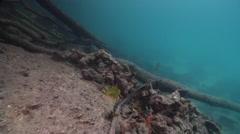 Ocean scenery large logs, on shallow silty but clear fallen tree habitat, HD, Stock Footage