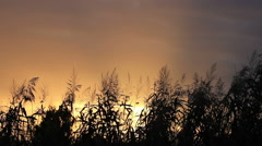 Scenic sunrise with reeds gently blowing in the wind and birds flying in the sky Stock Footage