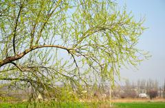 Branch with young leaves on a background of a farm - stock photo
