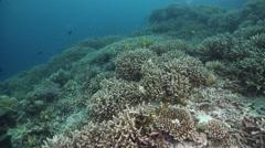 Ocean scenery in lagoon entrance channel, HD, UP33337 Stock Footage