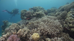 Ocean scenery on shallow coral reef, HD, UP33342 Stock Footage