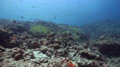 Ocean scenery on exposed seaward reef devastated by typhoon storm, HD, UP33384 Stock Footage