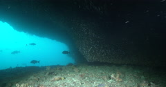 Ocean scenery various predators patrolling the mouth of a cave. - stock footage