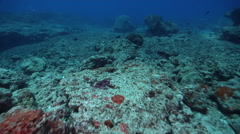 Ocean scenery moderate drift over reef stripped bare of almost all living coral - stock footage