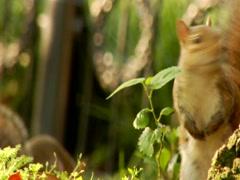 Squirrel looking to camera. Closeup of funny Squirrel Stock Footage
