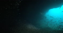 Ocean scenery lots of predators patrolling the entrance of a large cave, on Stock Footage