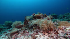 Ocean scenery deep down the slope among rubble patches, soft coral swaying with Stock Footage