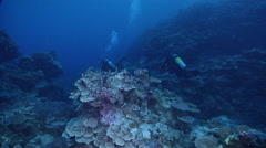 Ocean scenery diverse and healthy corals in nice formations and topography, on Stock Footage