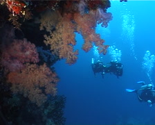 Group of scuba divers swimming on deep wall with Variable soft coral in Fiji Stock Footage