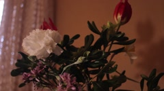 potted flowers in static camera and soft focus with profesisonal light - stock footage