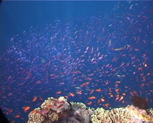 Ocean scenery jack attack, on shallow coral reef, UP1531 Stock Footage