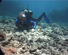 Male model scuba diver watching the critters on rubble with Rockmover wrasse in Stock Footage