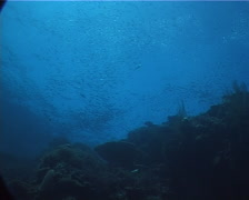 Ocean scenery fluid schools of baitfish far above, on shallow coral reef, UP1692 Stock Footage