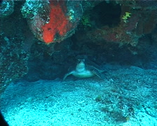 Green turtle in cavern, Chelonia mydas, UP1727 - stock footage