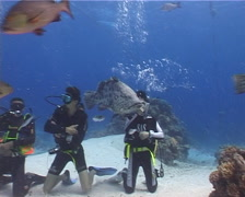 Large circle of divers watching feeding in fish feeding arena with Potato cod in Stock Footage