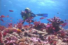 Expert diver with perfect buoyancy on shallow coral reef with Variable soft Stock Footage