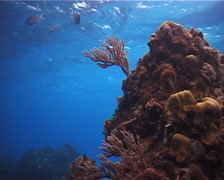 Ocean scenery on very shallow reef and surface, UP2873 Stock Footage
