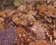 Ocean scenery on beautiful healthy and diverse reef, UP3013 Stock Footage