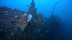Ocean scenery exploring upper deck of wreck encrusted with fans, in lagoon - stock footage