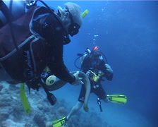Diver interacting with wildlife swimming on dead reef with Olive sea snake in Stock Footage