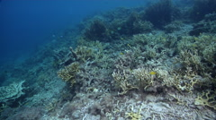Ocean scenery shallow area with some naturally broken fire coral, in lagoon Stock Footage