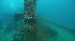 Longfin batfish on silty World War II wreck, Platax pinnatus, HD, UP33547 Stock Footage