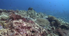 Ocean scenery millions of plantivores streaming toward the front of the reef, on - stock footage
