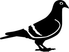 Sitting dove with details real - stock illustration