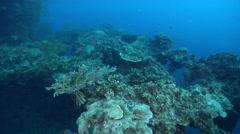 Ocean scenery Japanese navy fleet oiler, 140m/462ft long, sunk on March 31, Stock Footage