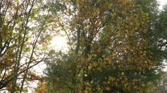 Sun peeking through trees on beautiful fall day 4k Stock Footage