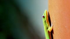 4K Seamless Loop Macro Close Up Shot of Gecko Reptile, Natural Sunlight Flicker Stock Footage