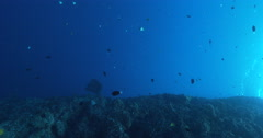 Vertical display shot of ocean scenery planktivores feeding in the blue opposite Stock Footage