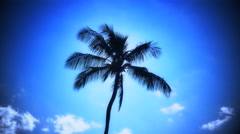 4K Palm Tree and Blue Sky Vignette Shot - stock footage
