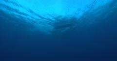 Ocean scenery small boat tinny driving overhead on calm seas and blue sky, in Stock Footage