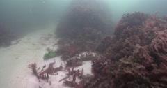 Ocean scenery lots of variety, on rocky reef covered in seaweed and kelp, 4K Stock Footage