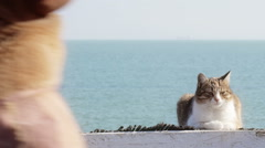 Cute Young Cat is Laying on a Beach Stock Footage