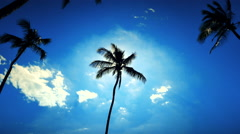 Stock Video Footage of 4K Palm Trees Silhouette, Sun Lens Flare Glint, Blue Sky, Vignette