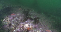 Ocean scenery surge and poor visibility, on rocky reef covered in seaweed and Stock Footage